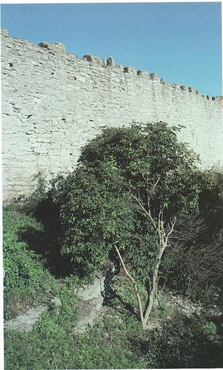 Sadeltorn 37